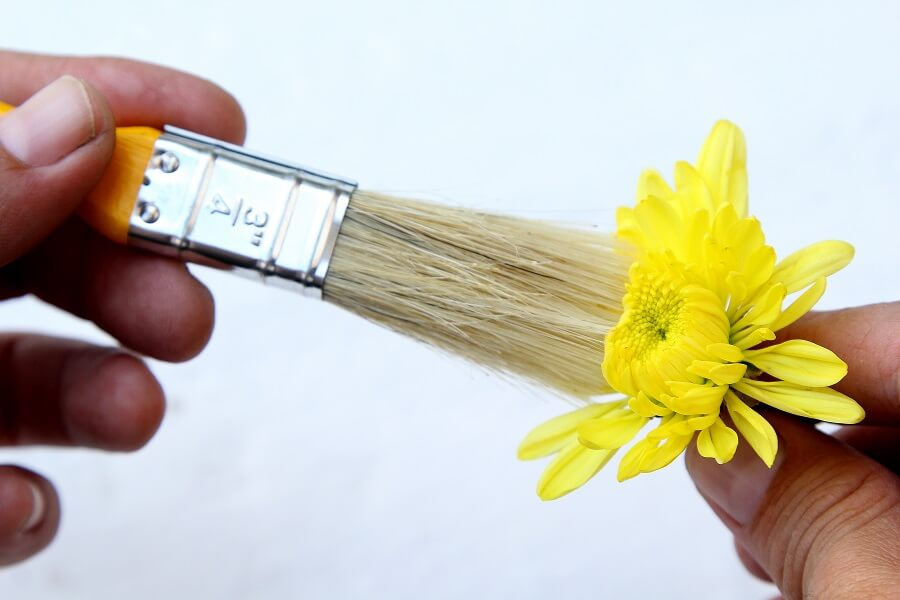 using a brush to dust a flowers