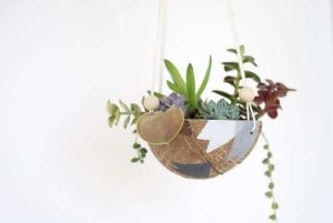 succulents in a coconut shell
