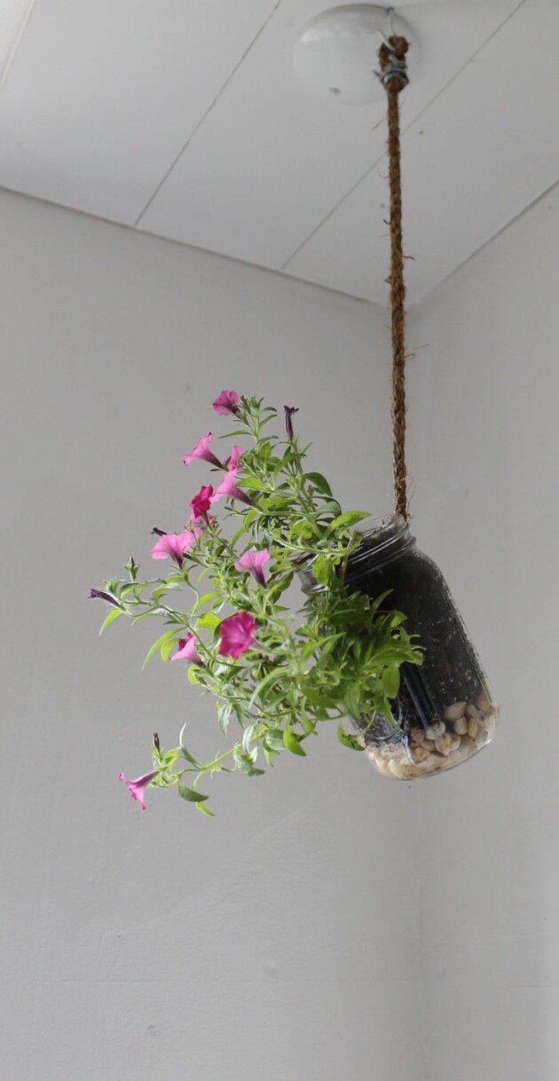 flower growing in a mason jar