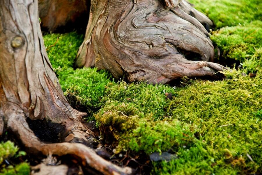 tree trunks surrounded by moss