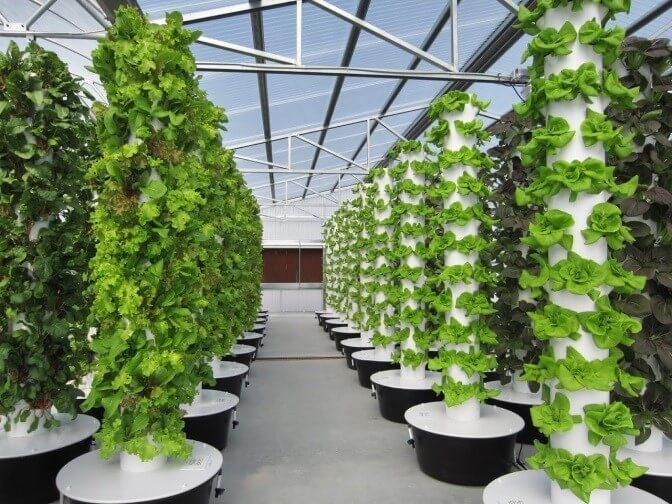 rows of tower garden systems
