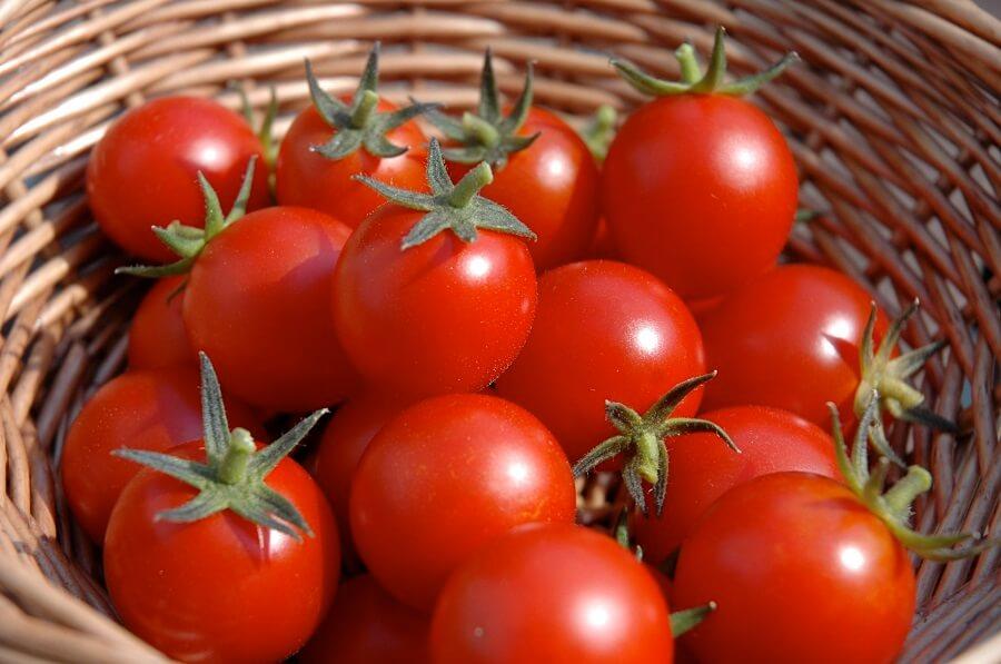 tomato plant spacing