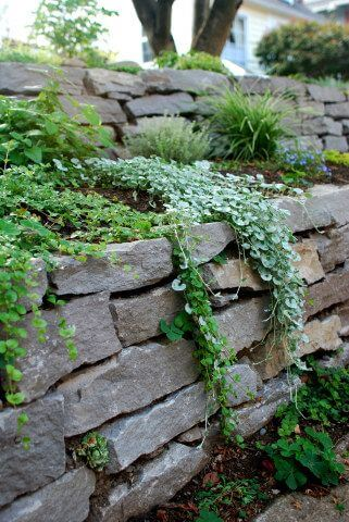 dry stack stone wall with plants over it