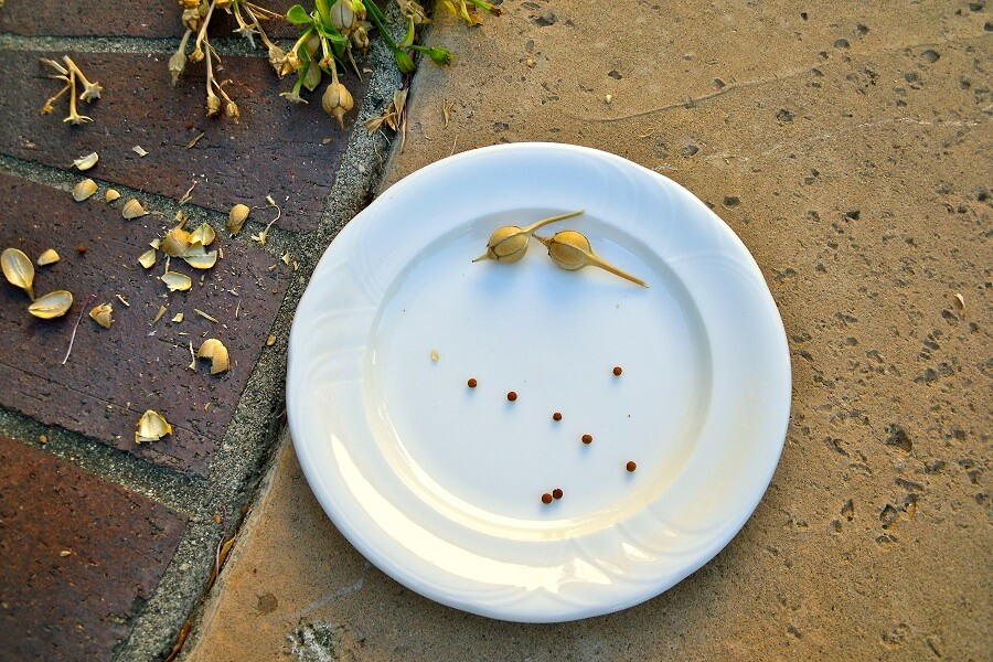 a plate with some seed pods and seeds on it