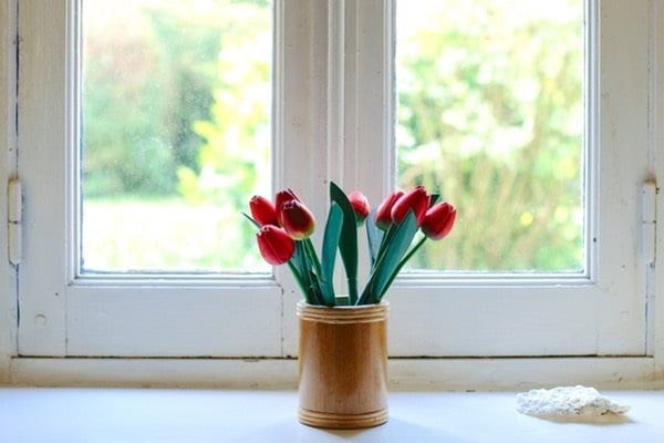 tulips, how to grow tulips
