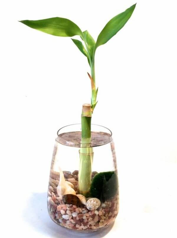 small bamboo plant in a vase