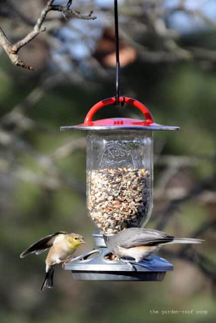 bird feeder made of a mason jar