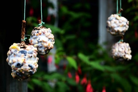 pinecones serving as bird feeder