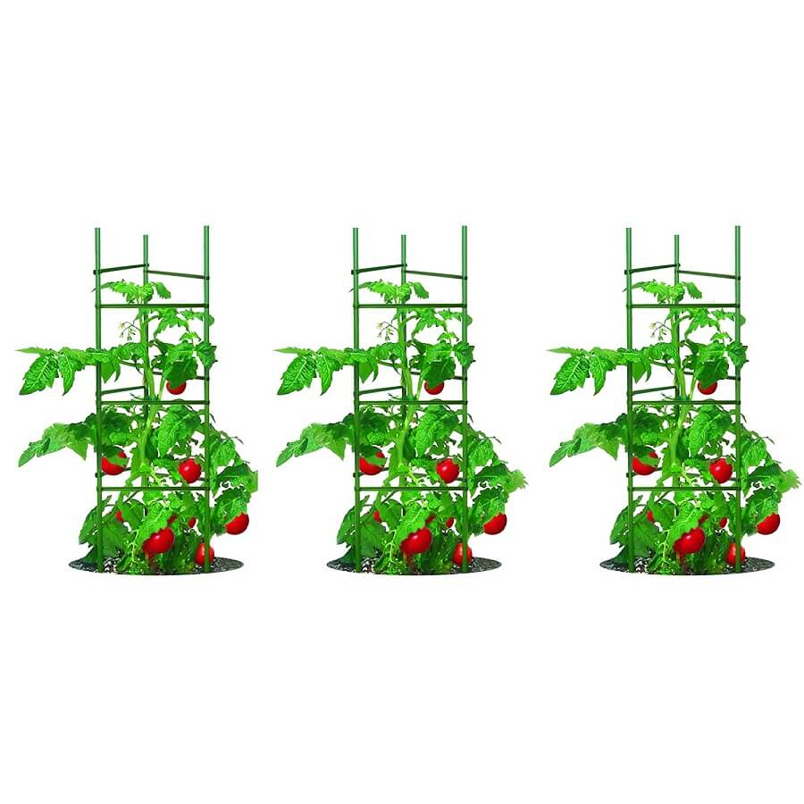 tomatoes growing in 3 cages
