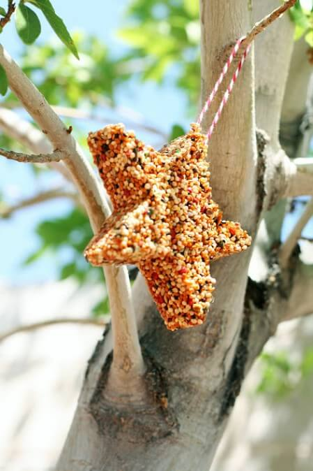 birdfeed made in the shape of a star