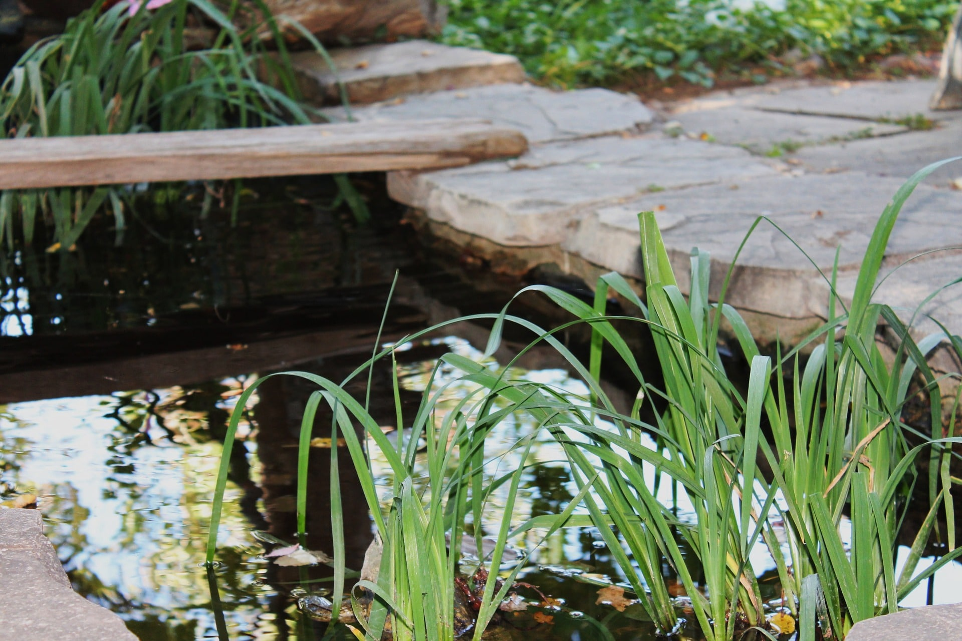 small pond landscaping