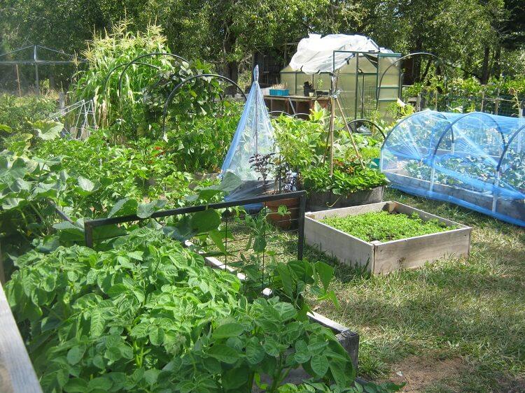 Backyard garden arrangement