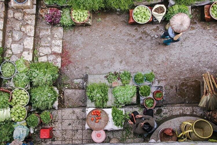 Vegetable Garden Pots