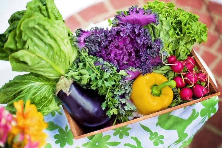 Backyard vegetable garden harvest