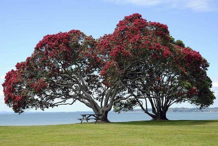 Big crape myrtle tree next to a lake