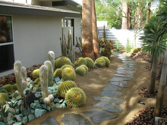 Cacti xeriscaping design alley
