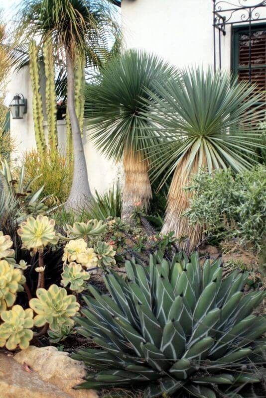 Drought tolerant plants for xeriscaping