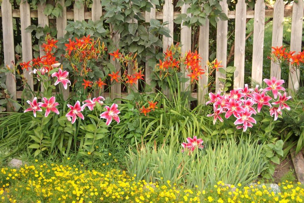 Backyard flowers selection