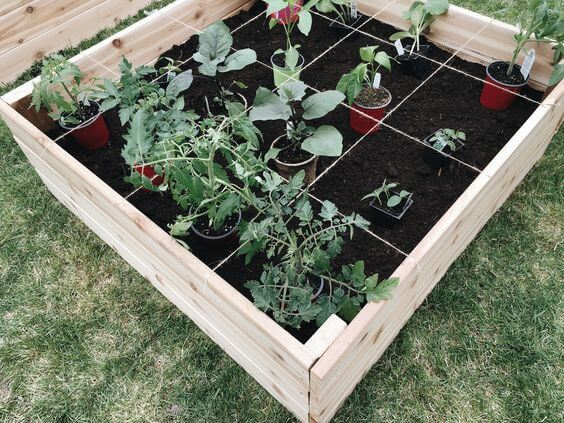 Square foot garden wooden soil beds