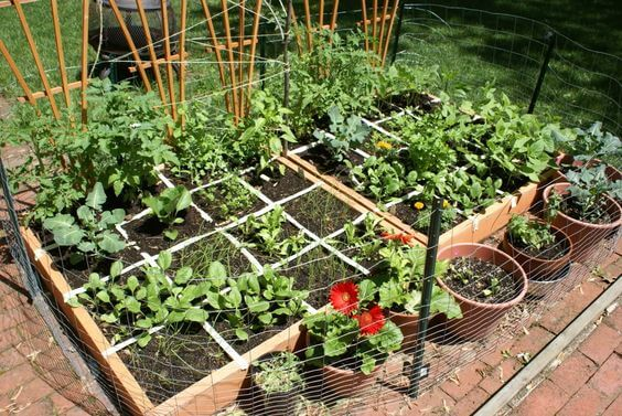 Square foot garden plants in beds