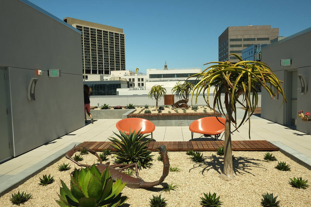 Xeriscape garden on rooftop deck