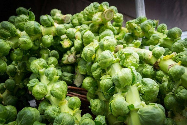 how to grow brussel sprouts caring