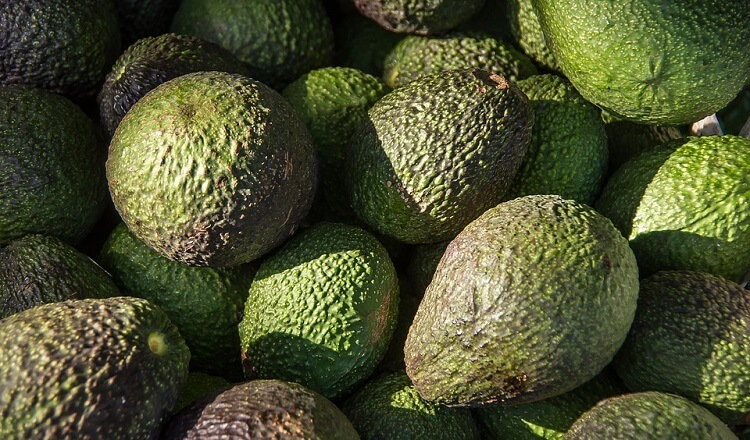 Avocado fruits in the sun