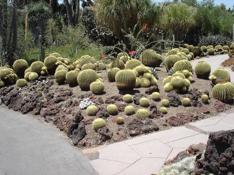 Succulents landscape with cacti