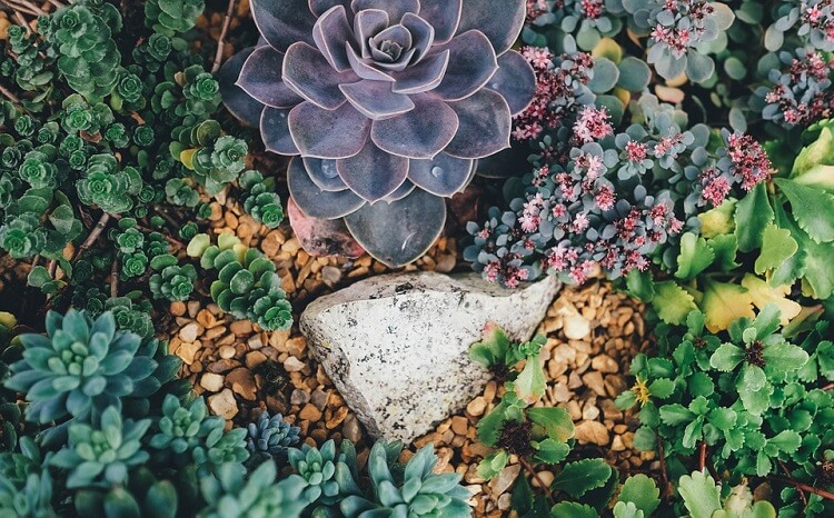 Colorful succulents, view from above