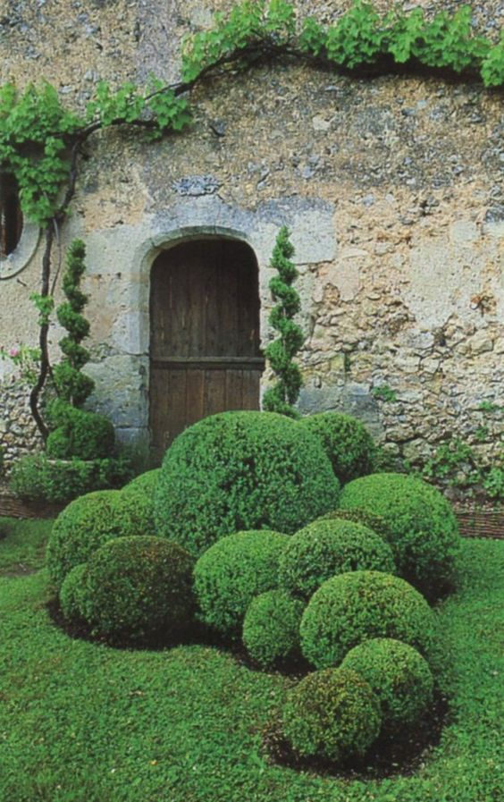 garden ornament living boxwood