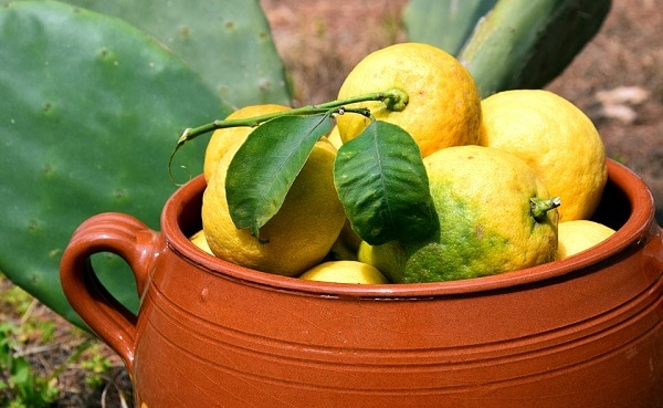 lemons in a brown clay pot