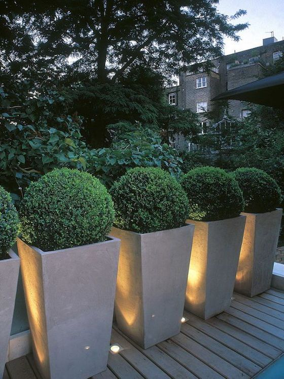 pots and urns with boxwood
