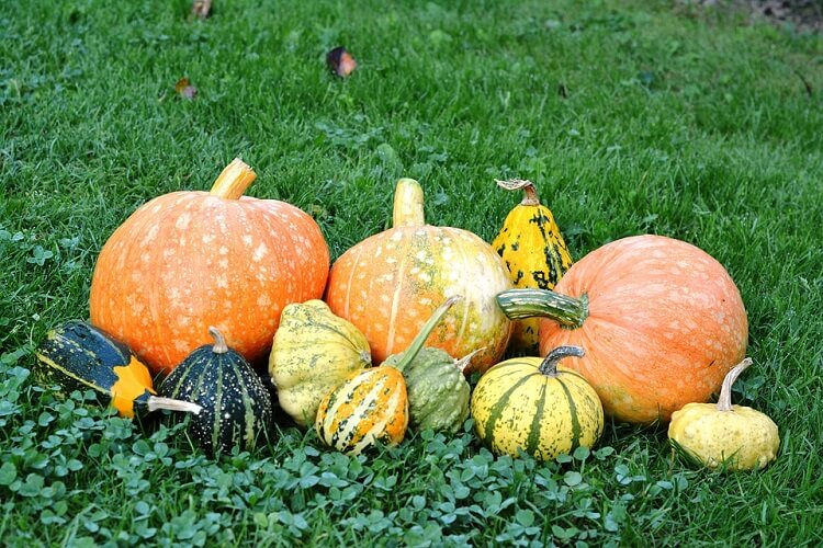 Pumpkin varieties laying on green grass