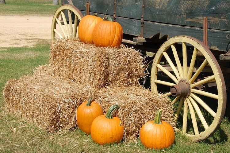 Pumpkins and hay next to a carriage