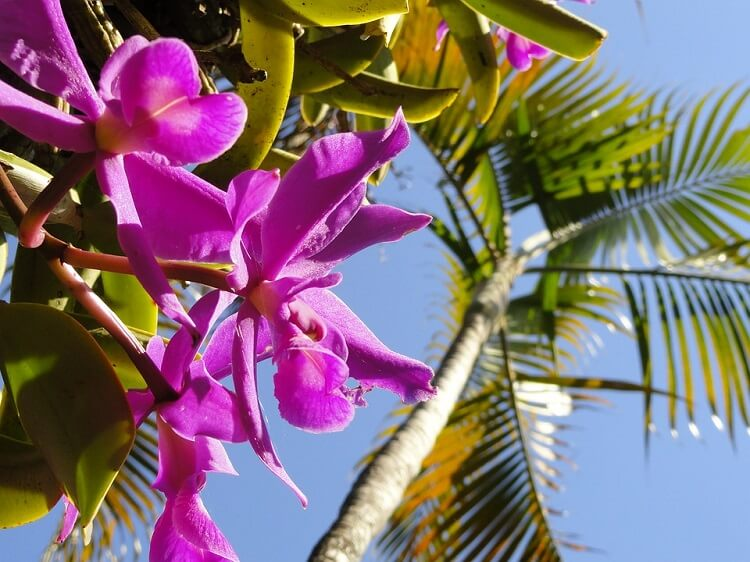 Purple orchid next to a palm tree