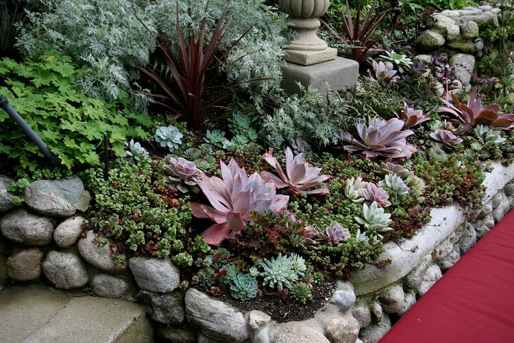 Succulents surrounded by a bed of rocks next to a pathway