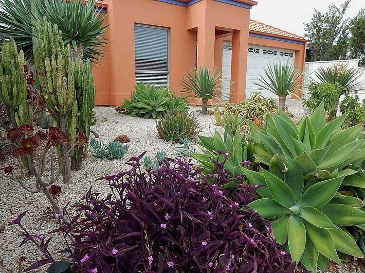 Succulents garden design with gravel