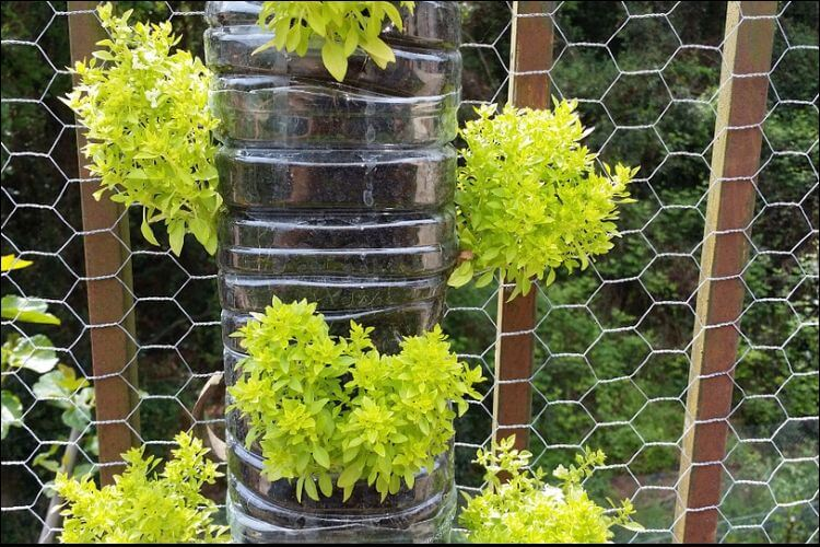 DIY garden basil stand