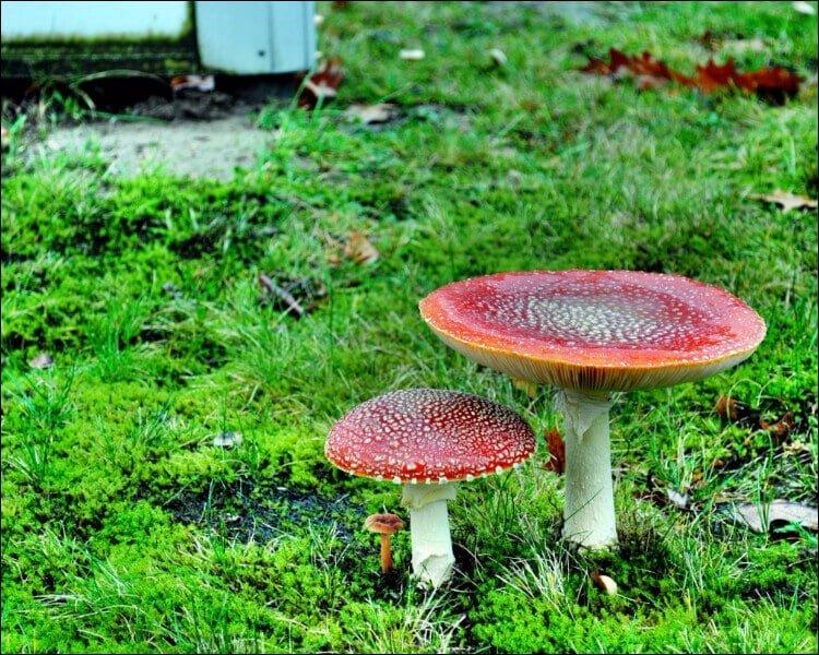 Edible garden with mushrooms