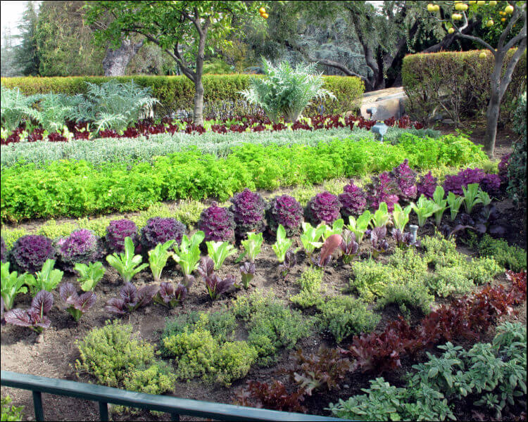 Row Flower Garden : Edible landscape design ideas to make the most out of