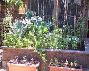 Edible garden space split into pots