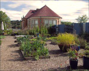 Edible landscape backyard idea