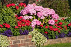 Colorful Hydrangea design with pink hydrangea flowers, red and purple small flowers on a brick wall