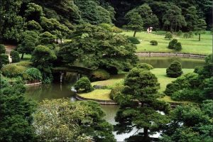 Garden pond design with luxurious shrubs and green trees