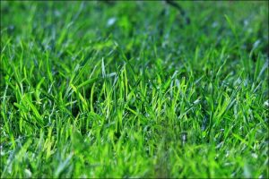 Close up of green grass lawn