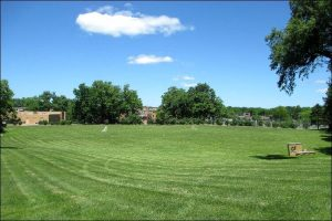Green lawn with mowing trails, with trees in the background and a sunny sky with few clouds