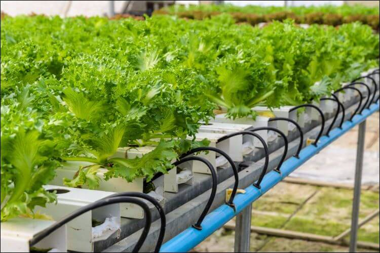 How to grow plants in water irrigation system
