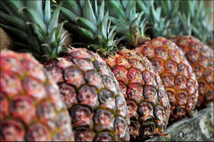 Close up of pineapples placed in a straight line