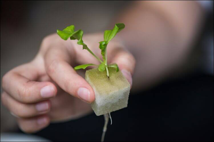 how to grow plants in water small plant grown in water being held by a person's hand