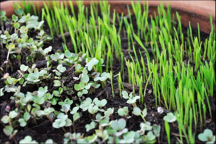 Close up of green plant sprouts in the soil